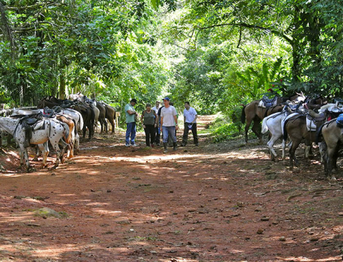 Horseback tour to Nauyaca Waterfall