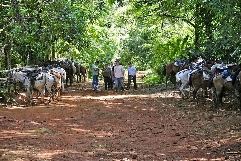 Horseback tour to Nauyaca Waterfall