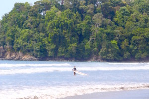 Jungle Surfing